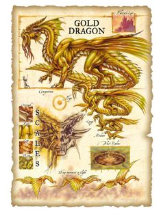 Dnd Dragons, Cool Dragons, Dungeons And Dragons, Mythological Creatures, Fantasy Creatures, Mythical Creatures, Fantasy Dragon, Fantasy Art, Dragon Anatomy