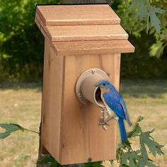Backyard bird watching is a fulfilling activity that people of all ages enjoy. Spring Hill carries bird feeders, bird food, bird houses & more. Homemade Bird Houses, Bird Houses Diy, Bluebird Houses, Bluebird House Plans, Spring Hill Nursery, Birdhouse Designs, Unique Birdhouses, Bird House Kits, Bird Aviary