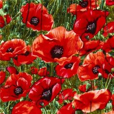 Michael Miller fabric red corn poppy meadow flower (Sold in multiples of meter) My Flower, Flower Art, Pictures Of Poppy Flowers, Meadow Flowers, Michael Miller Fabric, Wildflower Seeds, Modes4u, Red Poppies, Shades Of Red