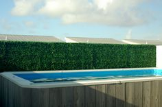 Artificial privacy hedge, blocking the neighbors' view of a pool.