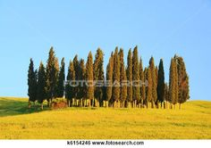 Tuscany forest 09