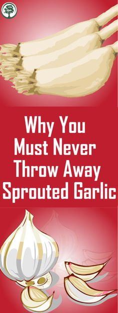 Why You Must Never Throw Away Sprouted Garlic ! - - Why You Must Never Throw Away Sprouted Garlic ! Why You Must Never Throw Away Sprouted Garlic ! Why You Must Never Throw Away Sprouted Garlic ! Garden Care, Endocannabinoid System, How To Remove, How To Get, Group Boards, You Must, Yoga Quotes, Aquaponics, Bodybuilding Motivation