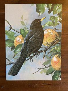 Black bird illustration paint 59 Ideas for 2019 Gravure Illustration, Bird Illustration, Illustrations, Loro Animal, Motifs Animal, Birds Of America, Watercolor Bird, Watercolor Landscape, Bird Drawings