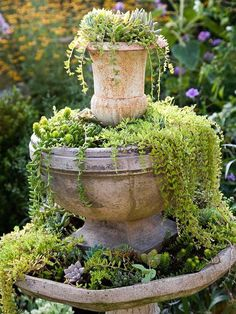 succulents in old water fountain