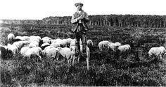Berger Landais - Première moitiée XXe siècle