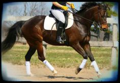 """Too Good To Be True? Finding Your Horse's """"Happy Place"""" 