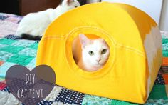 Turn an old t-shirt into a pet tent
