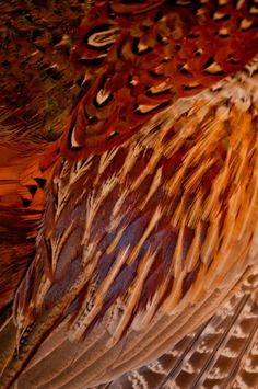 Pheasant feathers/love these shades!
