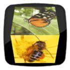 free online animated gifs maker, add glitter, photo manipulation tools