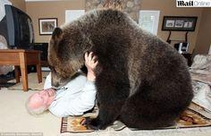 O casal canadense Mark e Daw Dumas resolveu deixar a tradição de lado e inovaram ao adotar como 'mascote da família' um urso gigante, que recebeu o nome de Billy. O urso pardo de estimação pesa 115 kg e tem 2 metros de altura. O animal leva uma vida de 'pet', brincando livremente pela casa dos donos