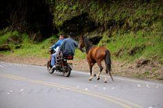 Traigan el caballo