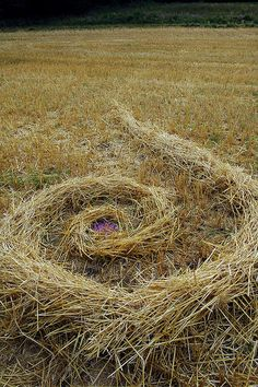 ♀ Environmental art earth art