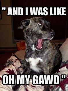 This dog gets how some teenage girls act.