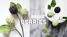 Fuchsia Flowers Buds and Berries promo - YouTube