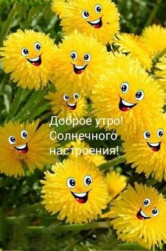 Funny Good Morning Messages, Cute Good Morning, Good Morning Greetings, Good Morning Quotes, Samsung Galaxy Wallpaper, Wallpaper Iphone Cute, Nature Wallpaper, I Miss You Wallpaper, Good Morning Images Flowers