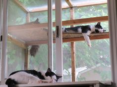 My kitties.all summer :) Kitty, Babies, Summer, Summer Time, Baby Cats, Babys, Summer Recipes, Baby, Cat