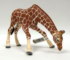 Giraffe Female Drinking