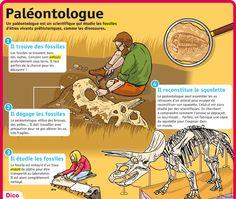 Fiche exposés : Paléontologue