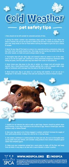 Pets and freezing weather