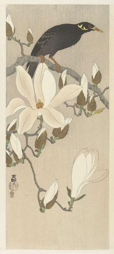 Beo op bloeiende magnoliatak, Ohara Koson, 1900 - 1910