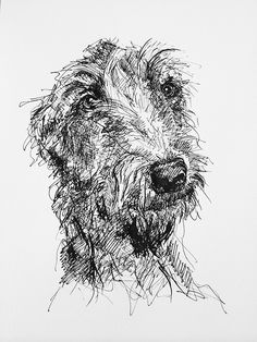 Artworks created by New Zealand based artist Lucy Wilson. Most of these pieces belong to a series of 'daily creation' projects such as the 100 Day Project ( and Animal Sketches, Animal Drawings, Pencil Drawings, Art Drawings, Line Drawing, Painting & Drawing, Scottish Deerhound, Irish Wolfhounds, Scribble Art
