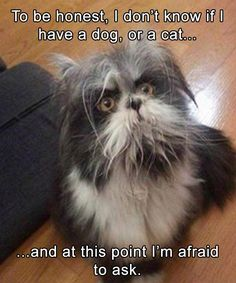 Funny Animal Pictures to Get You out of A Bad Day! - Funny Animal Quotes - - 20 Funny Animal Pictures to Get You out of A Bad Day! The post Funny Animal Pictures to Get You out of A Bad Day! appeared first on Gag Dad. Funny Animal Jokes, Really Funny Memes, Stupid Funny Memes, Cute Funny Animals, Funny Relatable Memes, Cute Baby Animals, Funny Cute, Top Funny, Funny Stuff