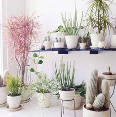 失敗しない室内観葉植物の選び方3つのポイントとおすすめ24選