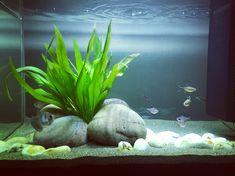 Aquarium Aquascape, Aquascaping, Betta Aquarium, Goldfish Aquarium, Goldfish Tank, Tropical Fish Aquarium, Betta Fish Tank, Fish Ocean, Cool Fish Tank Decorations