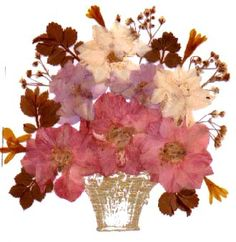 Pressed Flower Craft Ideas | Pressed Flowers books and pictures - Books & pictures about your