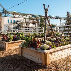 Magnolia Market | Magnolia Silos | Garden | Waco, TX | Chip & Joanna Gaines |