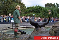 Um dos zoologicos mais legais do mundo