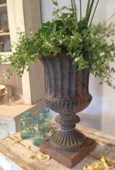 Urn plantings