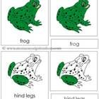 Frog Nomenclature Cards freebie