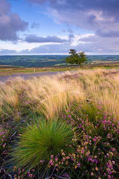 Dunkery Hill, Exmoor, Devon, England.