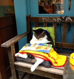 Pictures of a fat cat reading a book outside a café in Shimokitazawa (Tokyo), Japan. See all the pictures of this fat cat at http://www.traveling-cats.com/2013/11/cat-from-shimokitazawa-japan.html (fat cats, cat reading a book, pictures of fat cats, Shimokitazawa pictures, Shimokitazawa Tokyo, Shimokitazawa café)