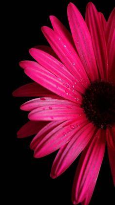 My Flower, Pretty Flowers, Flower Art, Black Flowers, Flower Phone Wallpaper, Cellphone Wallpaper, Beautiful Flowers Wallpapers, Cute Wallpapers, Phone Backgrounds