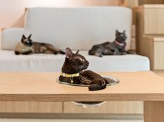 Designing a Purrfect Cat-Centric Home - The Purrington Post Chief Architect, Healthy Environment, Play Spaces, All Gods Creatures, Husband Love, Team Photos, Under Stairs, Design Process, Color Change