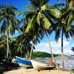 Where can you find a mix of caribbean nature and french elegance? Martinique is the answer! Outdoor Furniture, Outdoor Decor, Hammock, Caribbean, Boat, Canning, Nature, Laptop, French