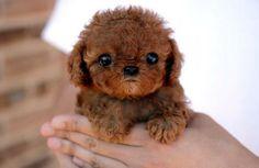 Teenie puppy.