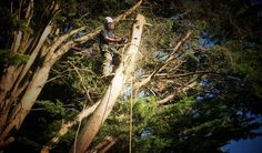Looking for an experienced Tree Surgery Company in Chichester West Sussex? Contact Cloudlandscapes Ltd today for a free quotation. . . . . . #faller #forestry #lumberjack #treefelling #treework #chichester #hardwork #gardenclearence #landscaping #husqvarna #westsussexbloggers #timberfalling #dreamjob #nature #earthfirst #arboristlife #treesurgerylife #arblife #arboriculture #milling #chipper #woodwork #woodlife #treeclimbing #practise #arbwork #localbusiness #woodturning #woodworking