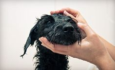 Dog Daycare or Bathing Package at Lucca Bella Doggie Spa and Boutique. Four Options Available. for $17
