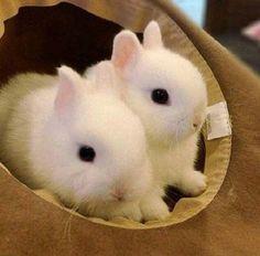 #double #rabbits