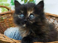 Zehn schwarze Katzenbabys zum Verlieben - Seite 4