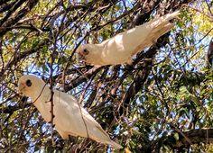 Beautiful couple © Photo by Sasha James Dion #birds #couple #mandurah