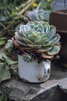 Suculentas & Cactus                     Laura
