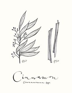 Cinnamon - Culinary Art Collection