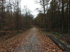 Laufend gebloggt: Runter ins Weißelbachtal