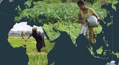 La escasez y degradación del agua: una creciente amenaza para la seguridad alimentaria http://www.iagua.es/noticias/agricultura/11/11/28/la-creciente-escasez-y-degradacion-del-agua-en-el-mundo-una-creciente-amenaza-para-la-seguridad-al…