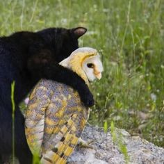 A very unusual friendship...the owl and the pussycat.
