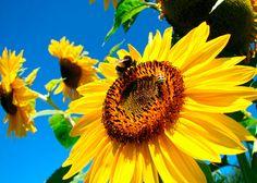 12 consejos para cuidar el medio ambiente (Parte 2) on http://quenergia.com
